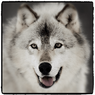 Niche Wolf Affiliate Program Details and Terms - Niche Wolf